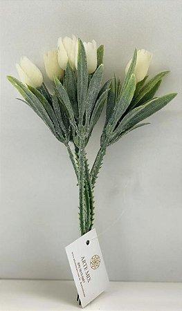 Mini tulipa aveludada