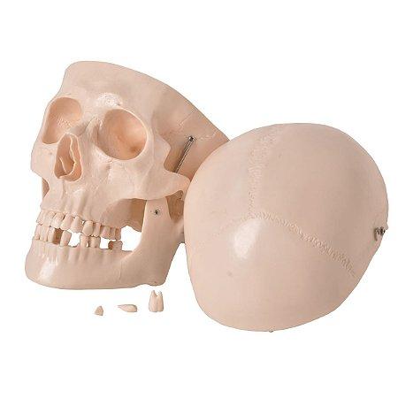 Crânio Natural em Resina em 5 Partes Desmontável Anatomic