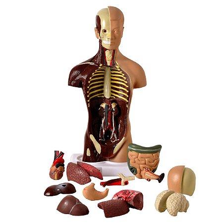 Torso bissexual Em 15 Partes E 28 Cm Anatomic