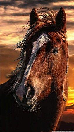 Quadro decorativos cavalos