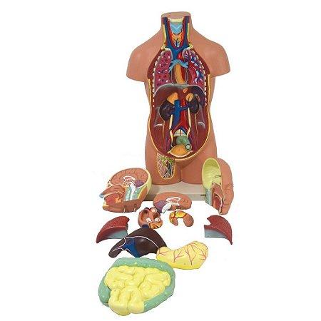 Torso Bissexual de 42 cm Com 14 Partes desmontáveis Anatomic