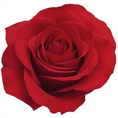 Rosas Vermelhas Nacionais - 01 Pacote com 20 unidades - Escolha o tamanho abaixo: