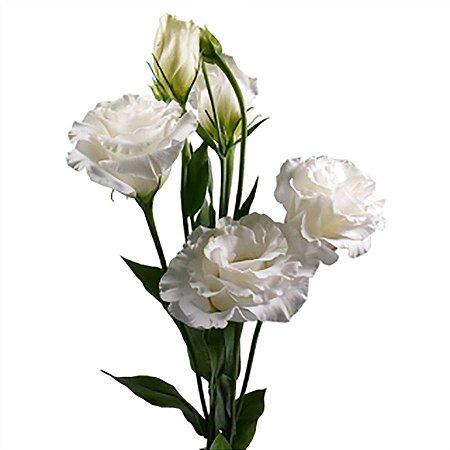 Lisianthus Branco Pacote para Arranjos e Buquês