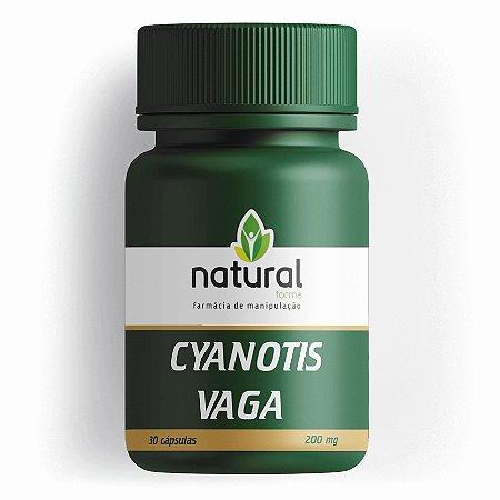Cyanotis Vaga 200MG 30 Cápsulas