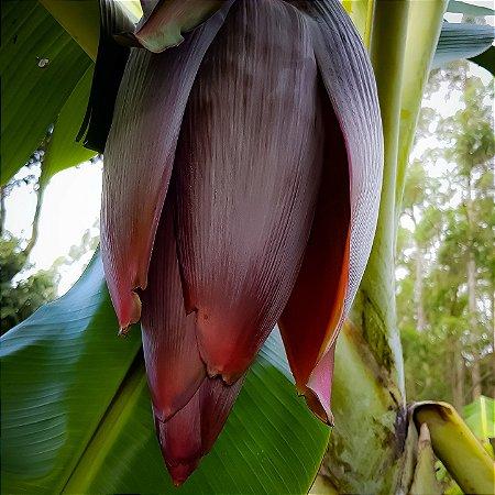 Coração da Bananeira