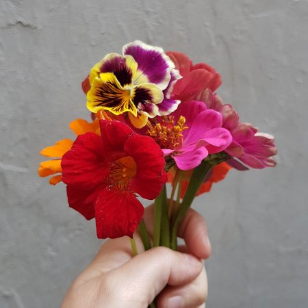 Flores Comestíveis