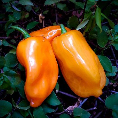 Pimenta Habanero
