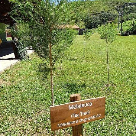 Óleo Essencial Tea Tree Branco  (Melaleuca)