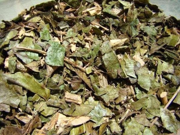 Chá de bugre 100g