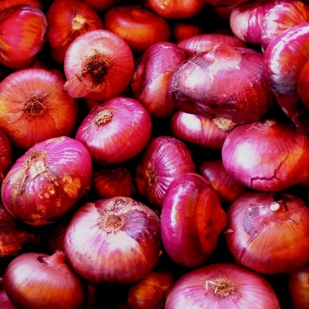 Sementes de Cebola Red Cipollini ORGÂNICO: 50 Sementes