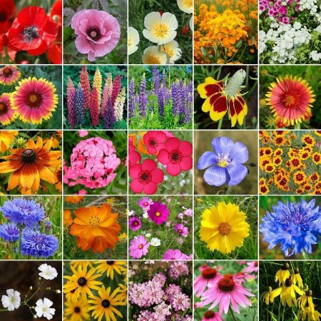 Sementes de Flores Sortidas: 300 Sementes