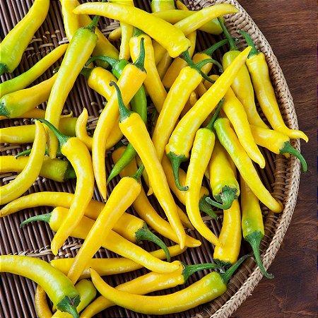 Sementes de Pimenta Cayenne Amarela (EXCLUSIVIDADE) : 20 Sementes