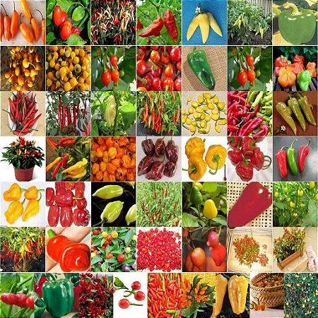 Sementes de Pimentas Sortidas: 100 Sementes