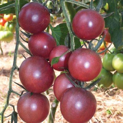 Sementes de Tomate Black Cherry: 20 Sementes