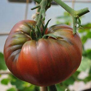 Sementes de Tomate Black Krim: 20 Sementes