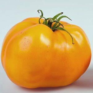 Sementes de Tomate Golden Sunray: 20 Sementes