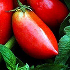 Sementes de Tomate Linguisa Polonês: 20 Sementes
