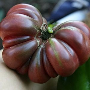 Sementes de Tomate Purple Calabash: 20 Sementes