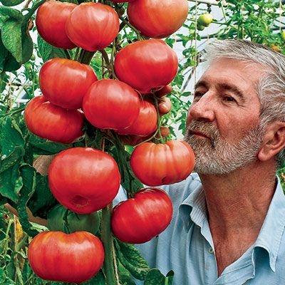 Sementes de Tomate Triple L Crop: 20 Sementes