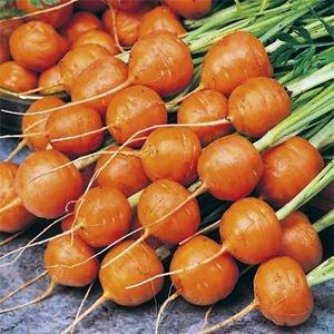 Sementes de Cenoura Redonda Nice: 100 Sementes