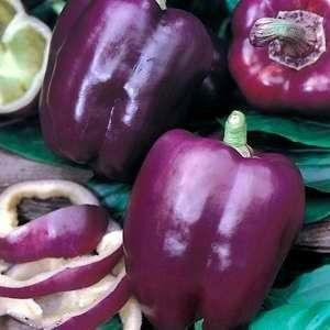Sementes de Pimentão Roxo: 10 Sementes