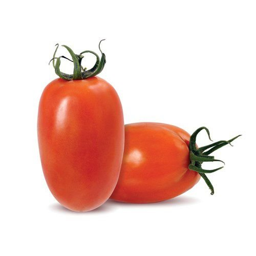 Tomate Rasteiro
