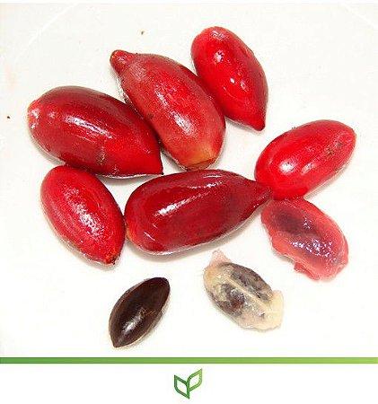 Fruta do Milagre Produzindo - Lindas Mudas