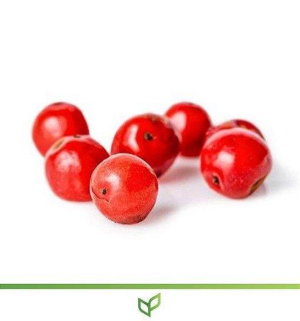 Pimenta Rosa ou Pimenteira - Lindas Mudas
