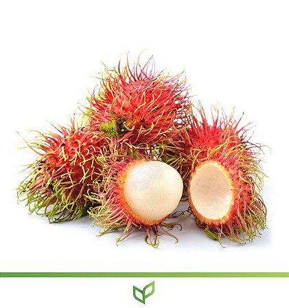 Rambutan, a Delícia do Pacífico  - Lindas Mudas