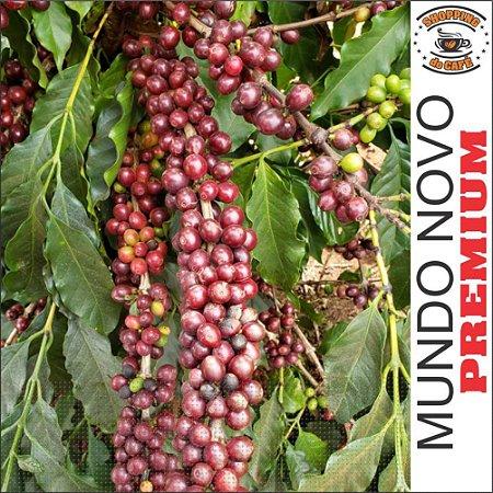 Café Para Torrar E Moer 18kg Especial Premium Coffee Brazil podendo até revender Bebida Mole