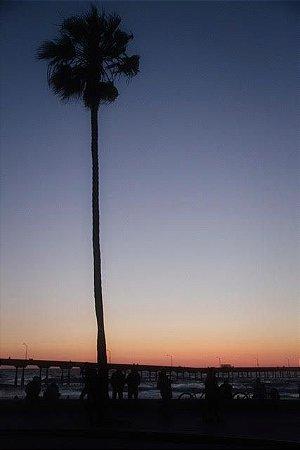 Foto 15 Rodrigo Machado - One Palm Tree