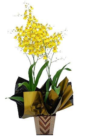 Orquídea Amarela Chuva de Ouro