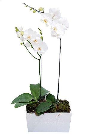 Orquídeas Brancas Dupla