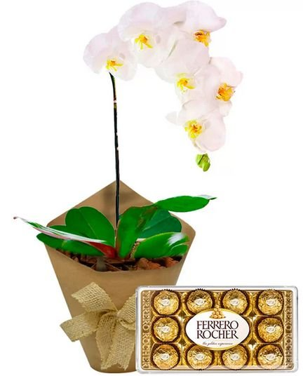Orquídea Branca com Chocolate