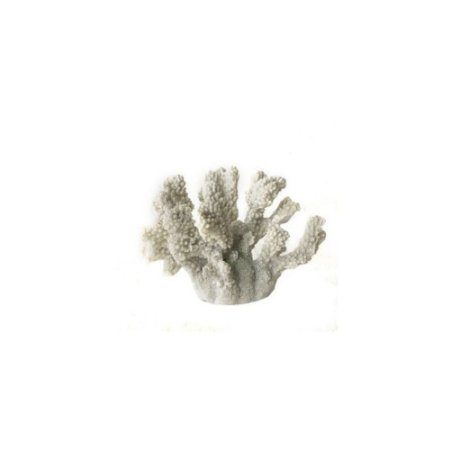 Coral Branco P
