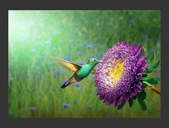 Quadro Pássaro Beija Flor com Moldura E Vidro