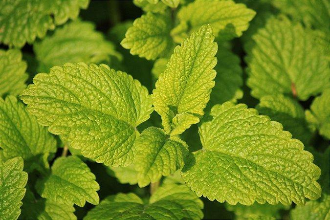 Perfume para Ambiente Home Spray Ekomist Lemongrass - 1L