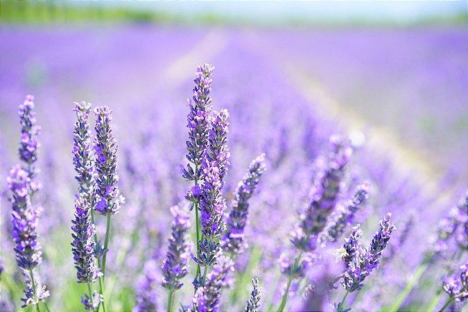 Perfume para Ambiente Home Sprak Ekomist Giona - 1L