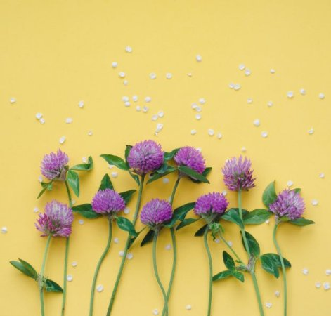 Perfume para Ambiente Home Spray Ekomist Natureza