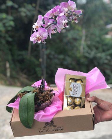 Orquídeas e Chocolates