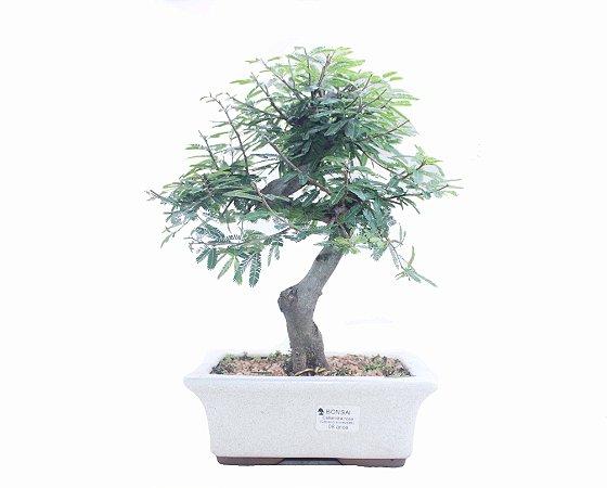 Bonsai de Calliandra Rosa  08 Anos ( 35 cm )