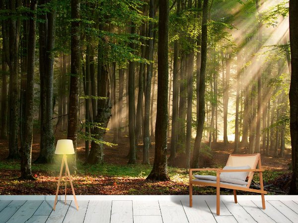 Painel Parede Fotográfico Floresta de Outono