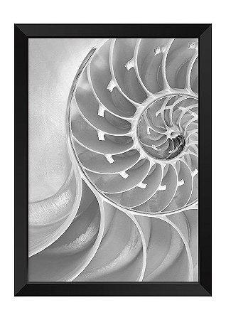 Quadro - Concha de Nautilus