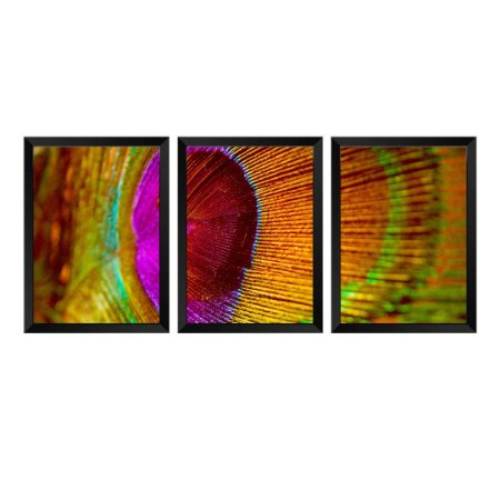 Kit de 3 Quadros Penas Pavão Eye
