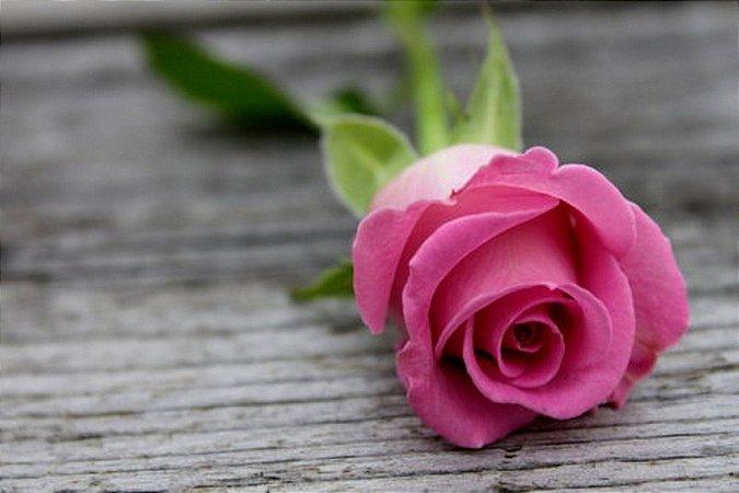 Essência Pink Rose 100ml