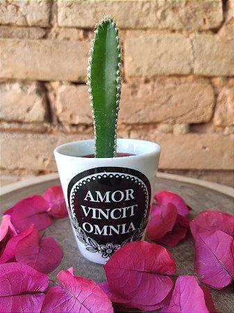 """Vasinho P """" Amor Vincit Omnia"""""""