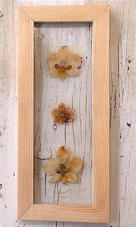 Quadro de flores naturais - Orquídeas