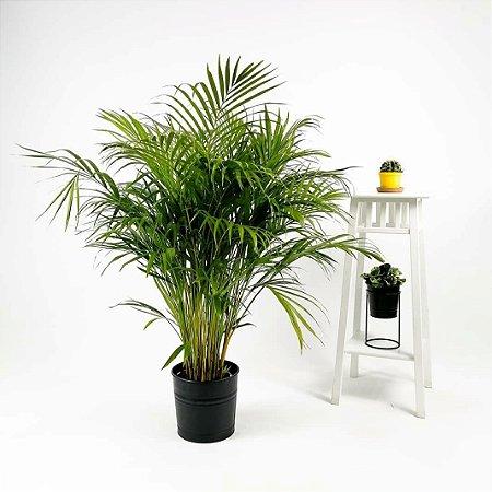 Palmeira Tropical Com Um Vaso Decorativo.