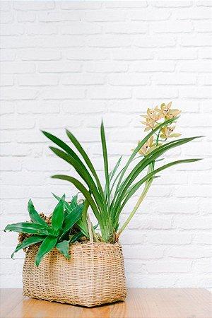 Cesto de palha com Orquídea e Bromélia