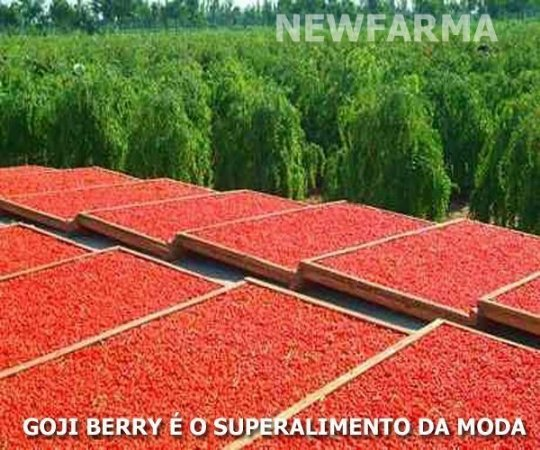 GOJI BERRY (O Super Alimento da Moda ) 60 Capsulas - 500 mg